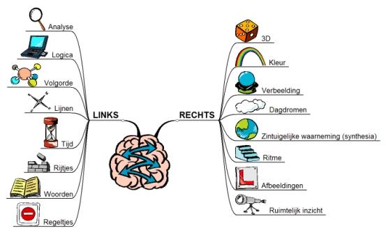 Hersenen-samenwerking