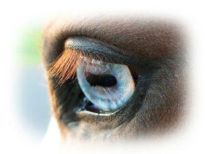 hooggevoelig kind en paardencoaching
